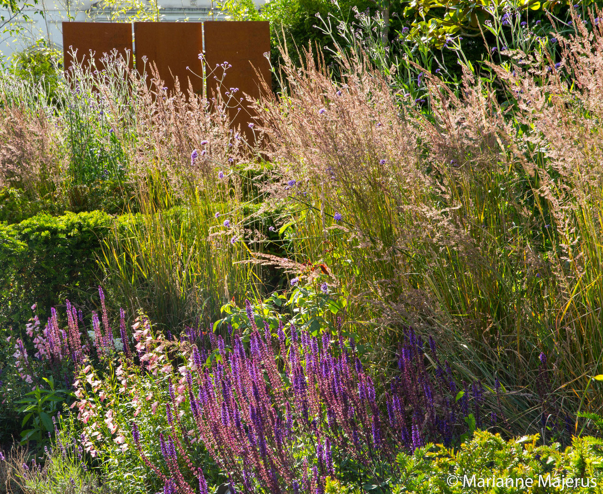 Detail of the planting in this North London garden where soft pinks merge with the mature grasses, Calamagrostis 'Karl Foerster' for a wilder look.