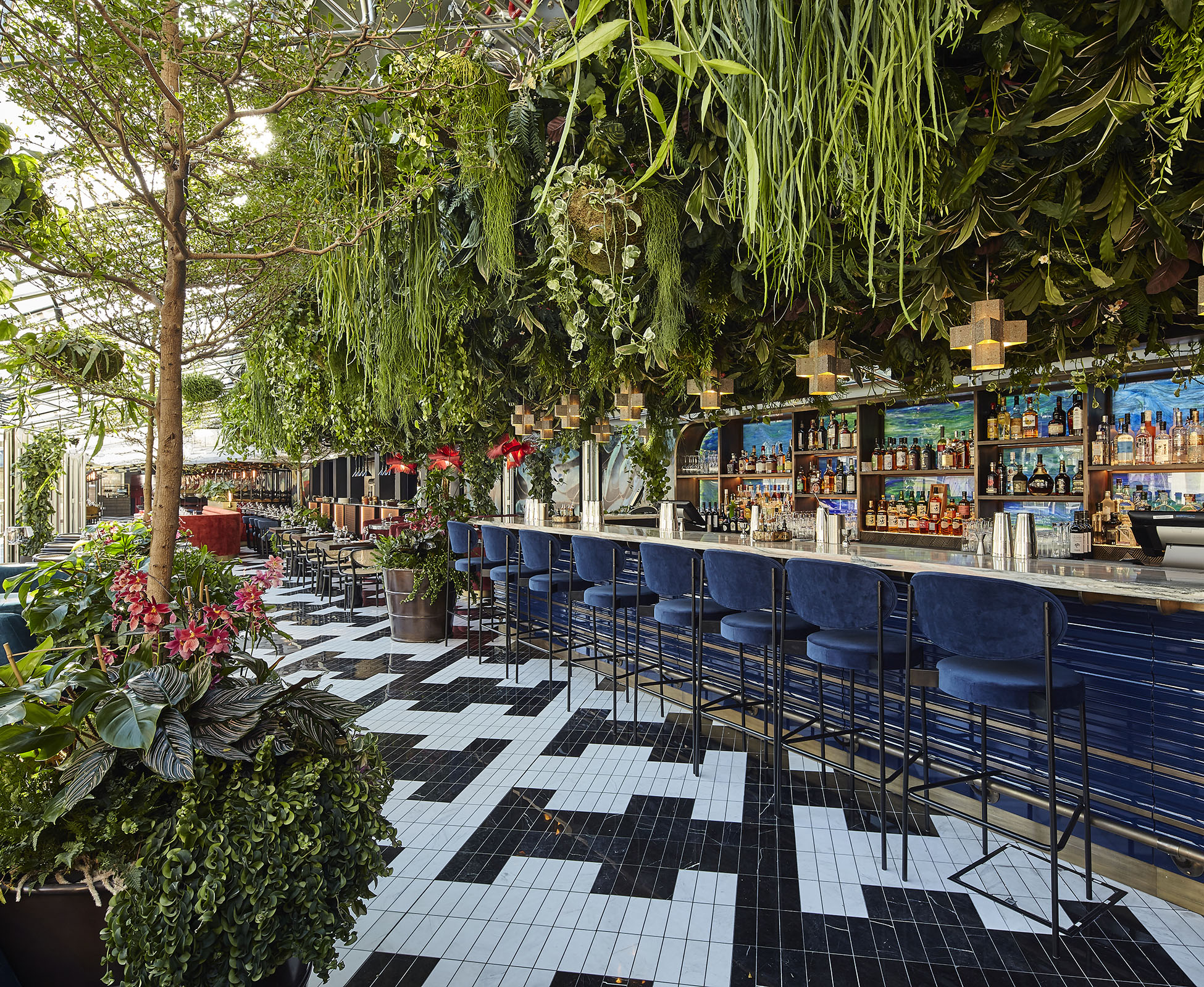 The majestic Bucida trees create a dramatic focal view as you enter Sushisamba Covent Garden, forming an avenue through the dining area and cocktail bar.